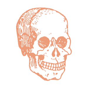Illustration of a skull