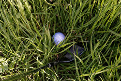 A golf ball and club in the grass