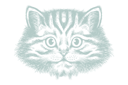 Illustration of a cat's face